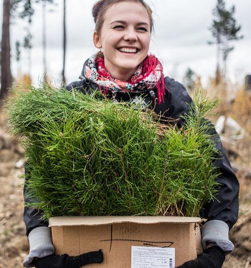 Россиян научат самостоятельно озеленять города и сажать деревья