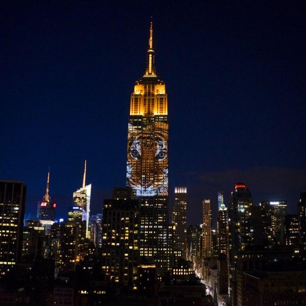 10 фото исчезающих видов животных на главном небоскребе Нью-Йорка