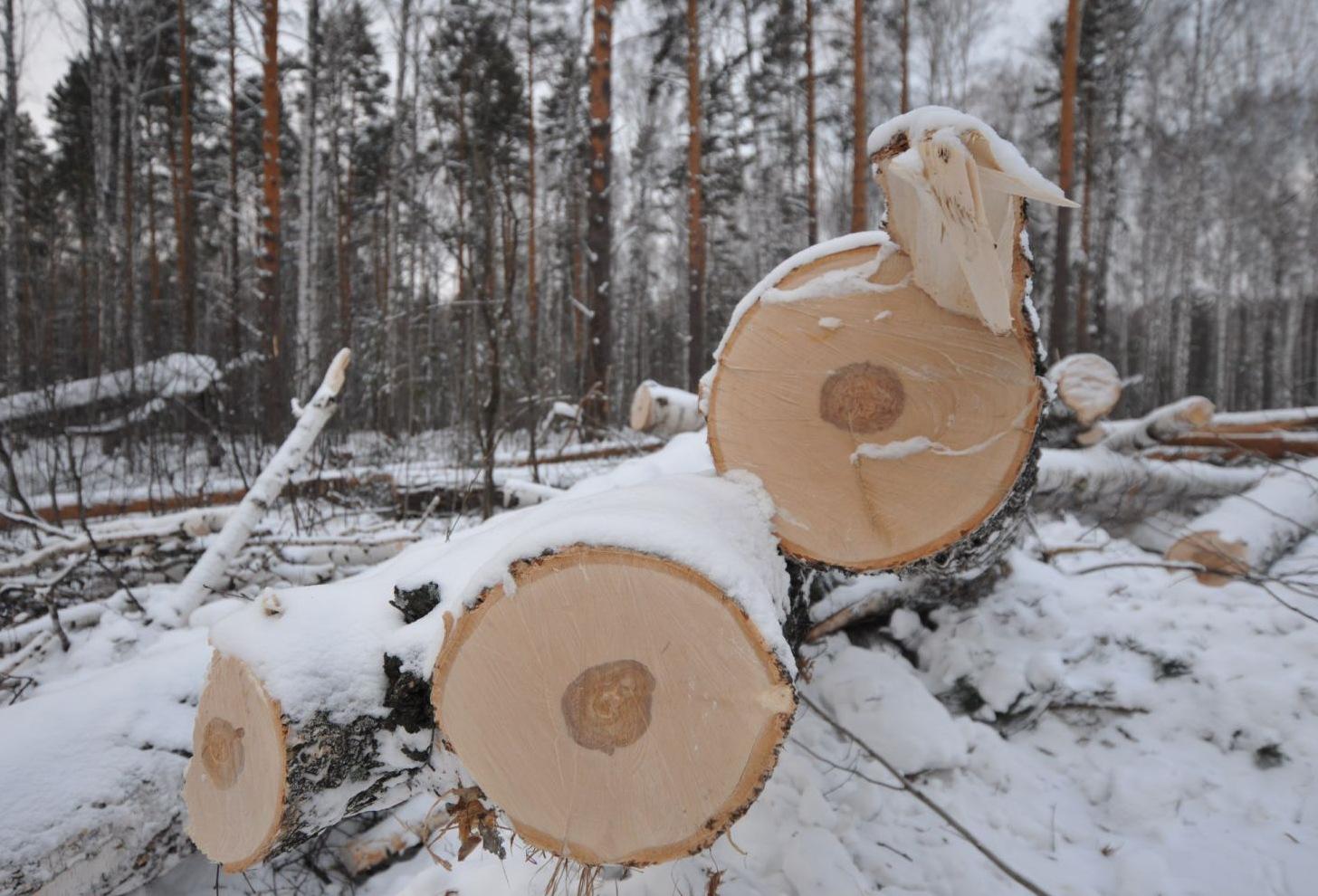 ОНФ в два раза сократил вырубку леса в Вологодской области