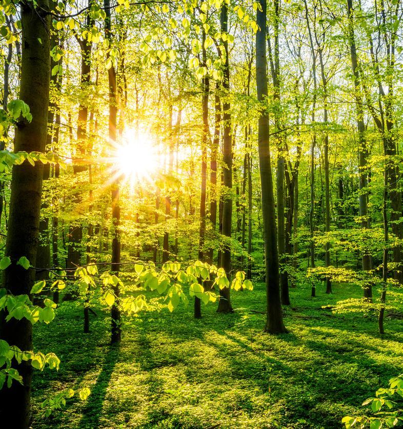 На открытом мастер-классе расскажут, как спасти леса от уничтожения