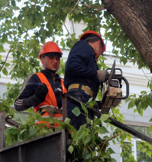 ЭкоИнструкция: что делать, если за окном рубят деревья