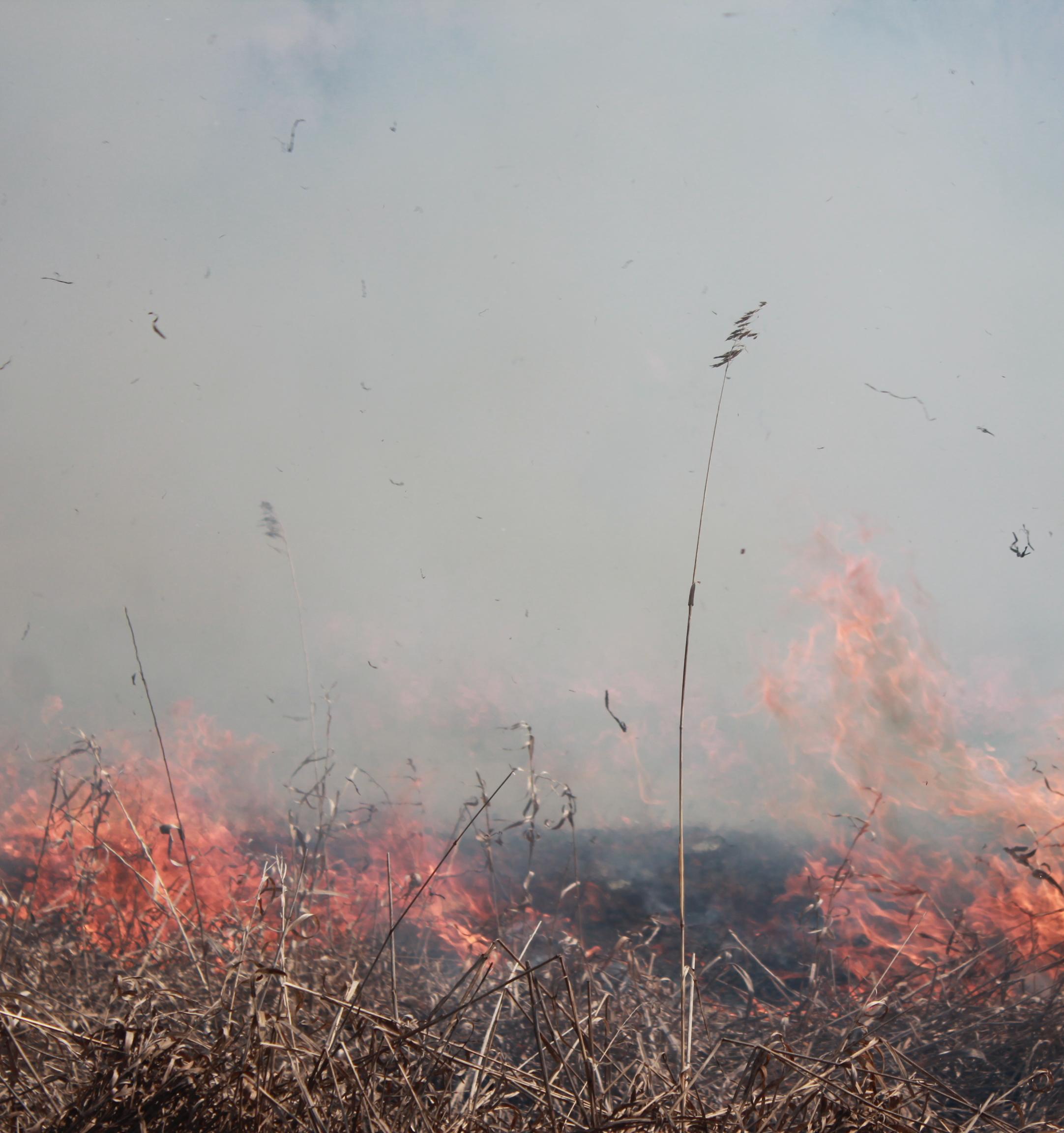 Добровольцы в Новосибирской области не могут добиться тушения многолетнего лесного пожара