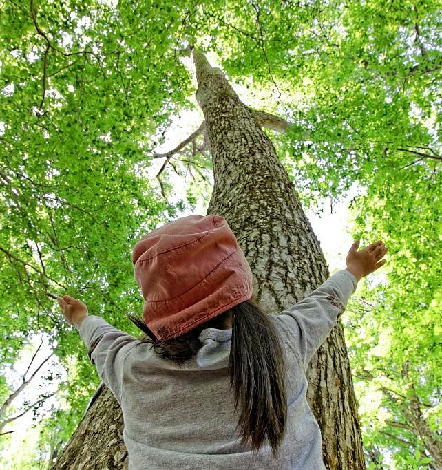 Российские студенты примут участие в экоквесте «Лесомания»
