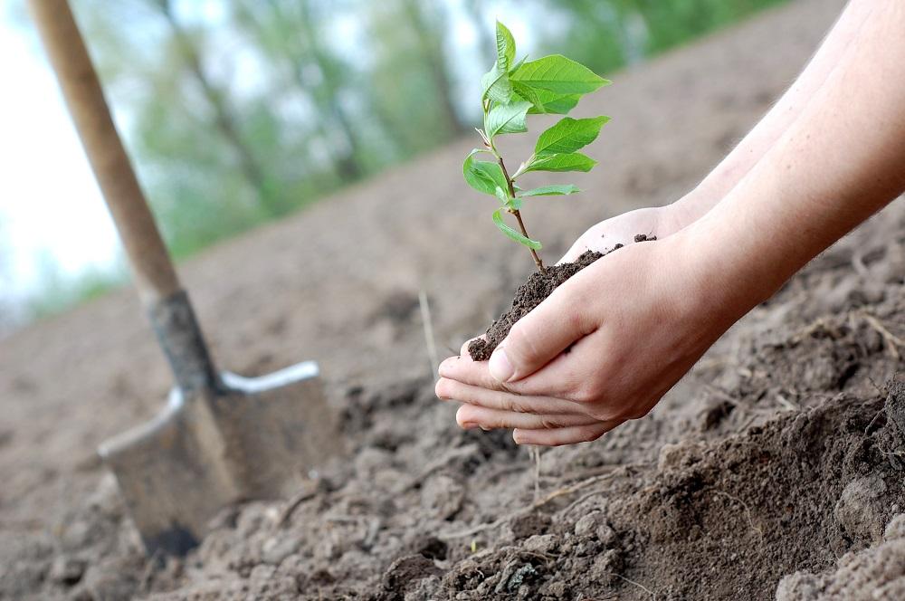 Москвичей приглашают посадить лес