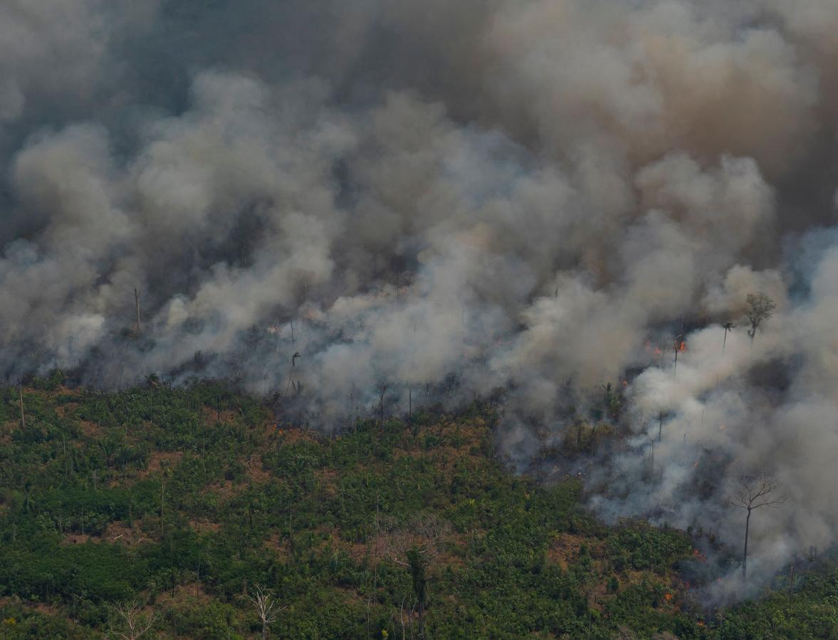 Леонардо Ди Каприо выделит 5 млн долларов на спасение лесов Амазонки