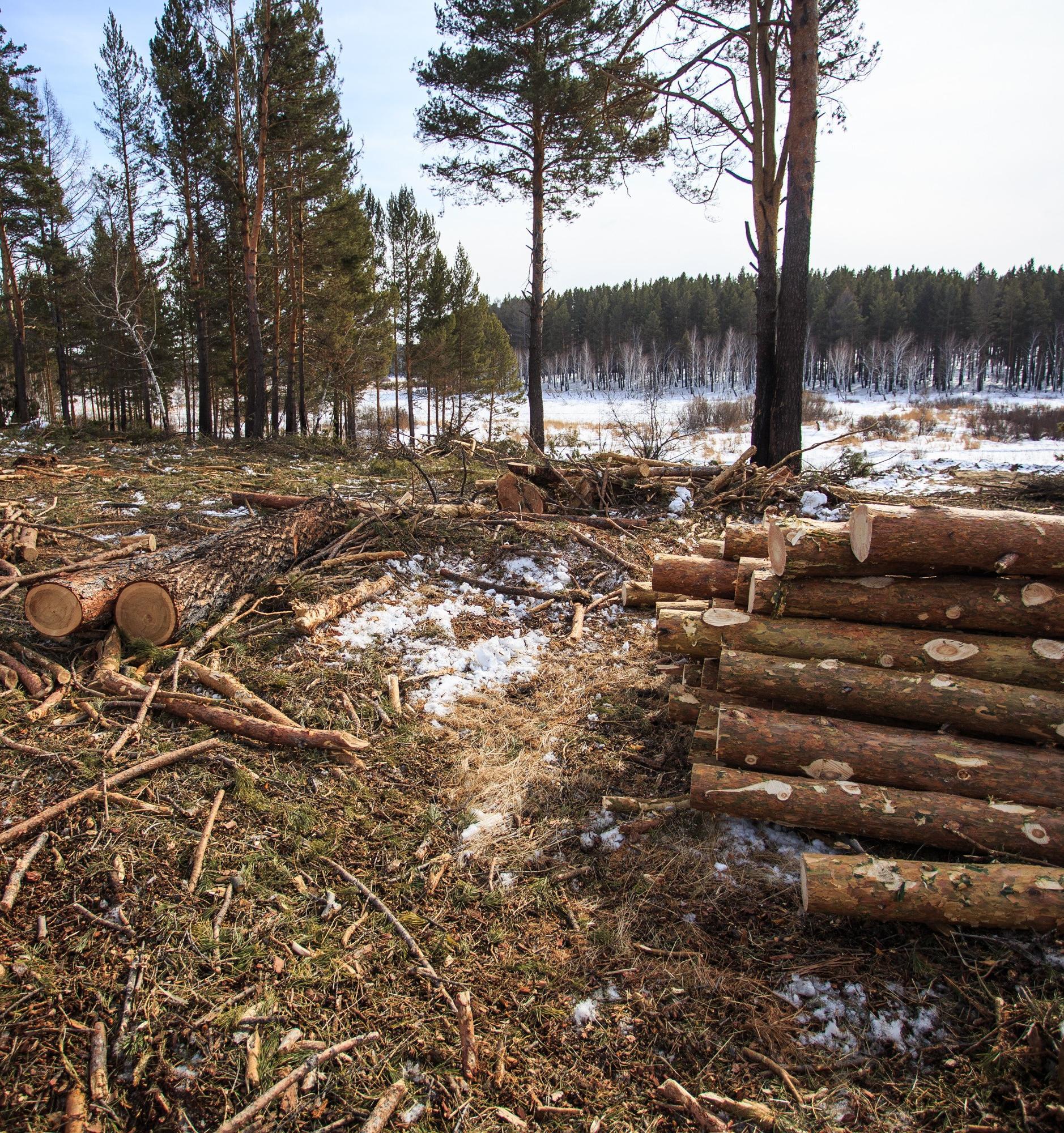 Жители Иркутской области требуют остановить преступную вырубку лесов
