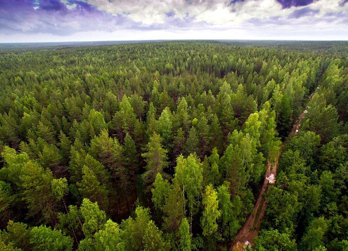Что такое национальный проект «Экология» и как изменится Россия к 2024 году