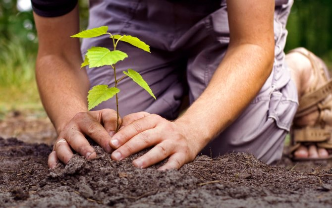 1,5 млн деревьев посадят в Подмосковье во время экологической акции