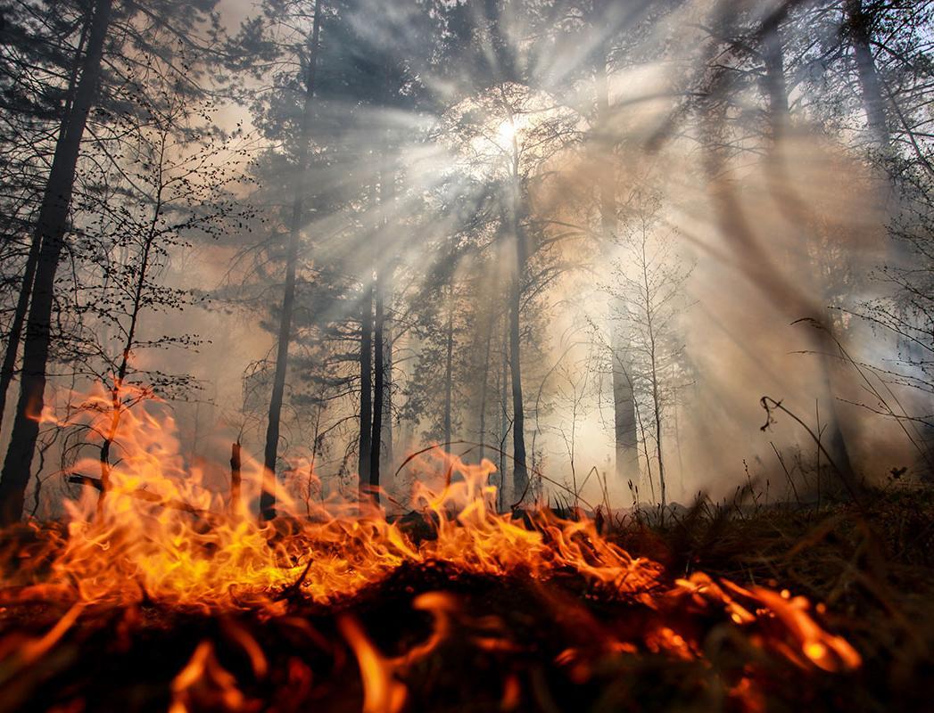 Жители Сибири требуют ввести режим ЧС из-за лесных пожаров в регионе