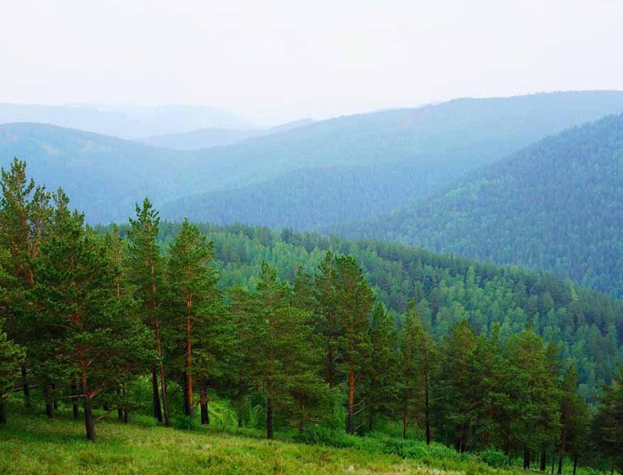 Прошли первые 100 дней программы по спасению лесов Сибири