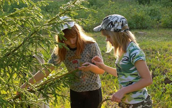 Открыт набор в летнюю школу по экологии