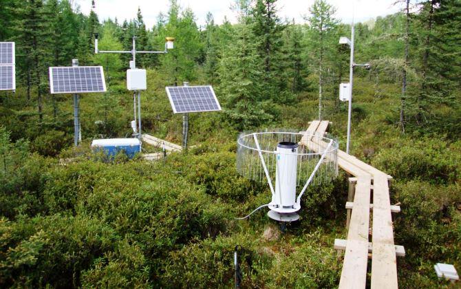 Экспериментальный лес поможет предсказать влияние глобального потепления