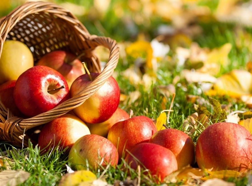 Благотворительная служба объявила сбор яблок