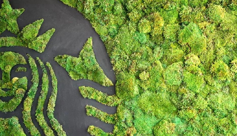 5 новых экологических инициатив Starbucks