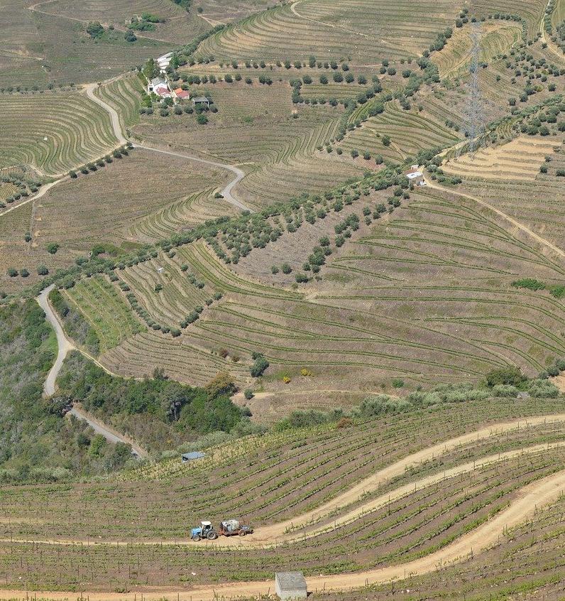 Португальцы внесут деревья в единую электронную базу