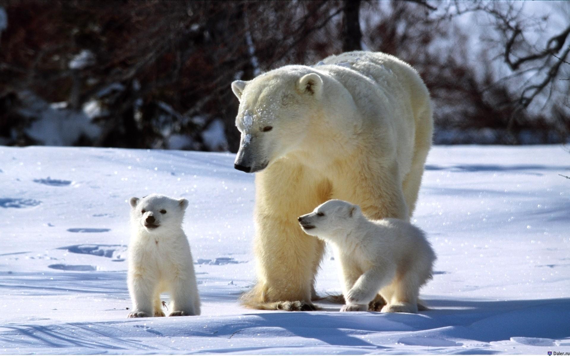 Московский зоопарк планирует организовать экотуры на Северный полюс