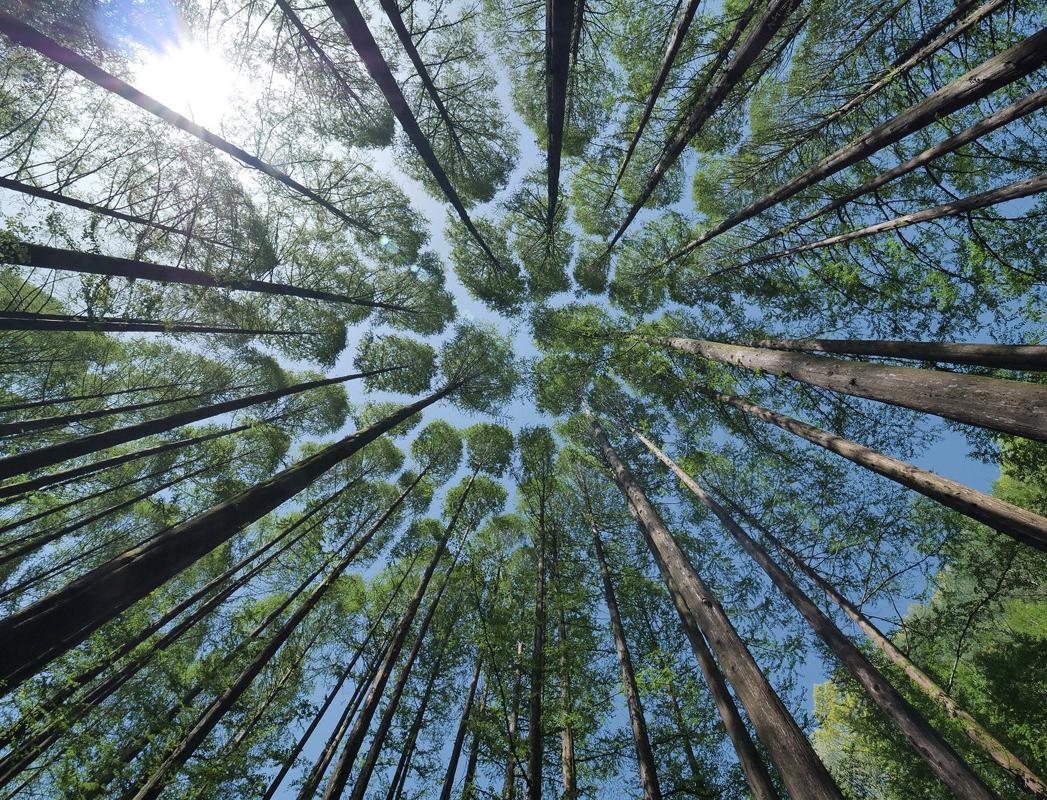 Как будут выбирать победителей премии «Зеленый проект года – 2021»