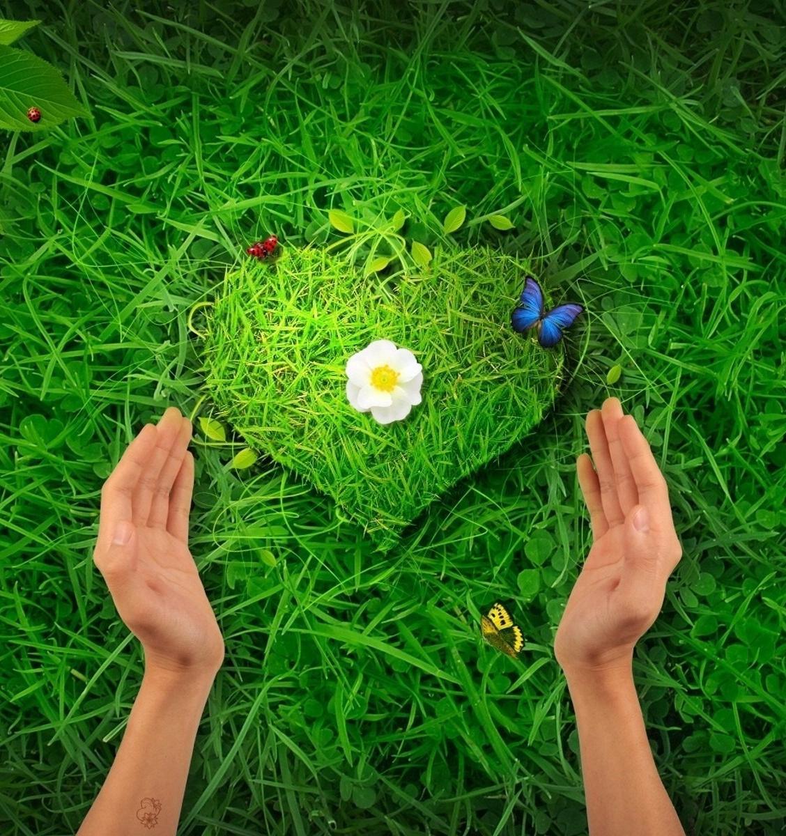 Экологи предлагают подарить деревья любимым людям на День Валентина