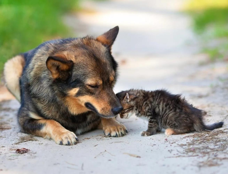 Россиян научат заботиться о бездомных животных