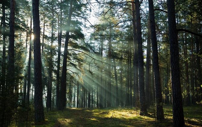 Путин поручил ОНФ сделать Лесной кодекс более экологичным