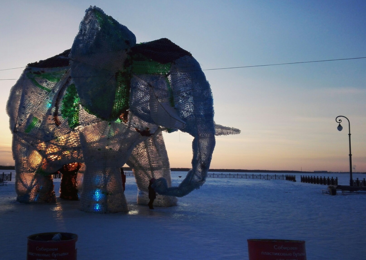 Слон из пластиковых бутылок в Архангельске может попасть в Книгу рекордов Гиннесса