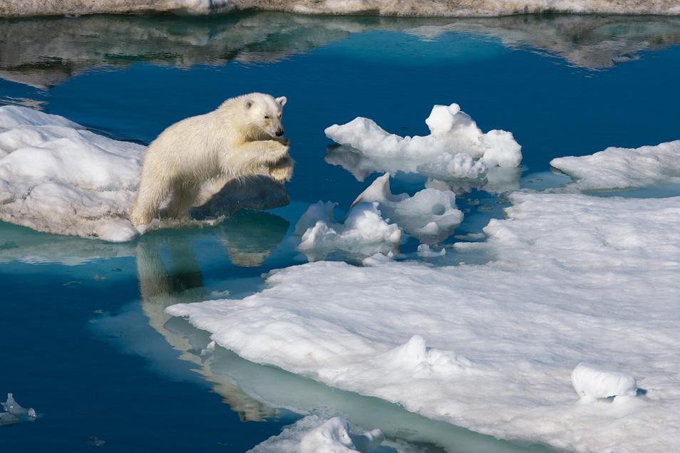 Климатологи определили площадь льдов Арктики в 2100 году