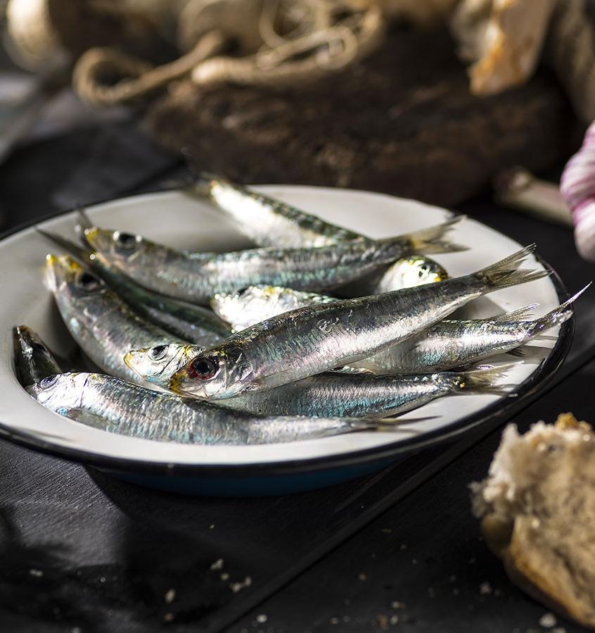 В сардинах больше микропластика, чем в других морепродуктах