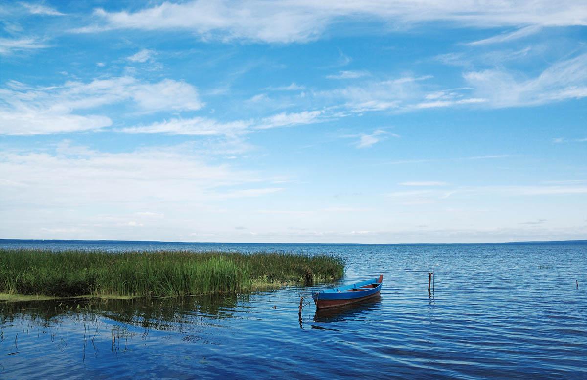 Москвичей приглашают посадить ели в национальном парке «Плещеево озеро»