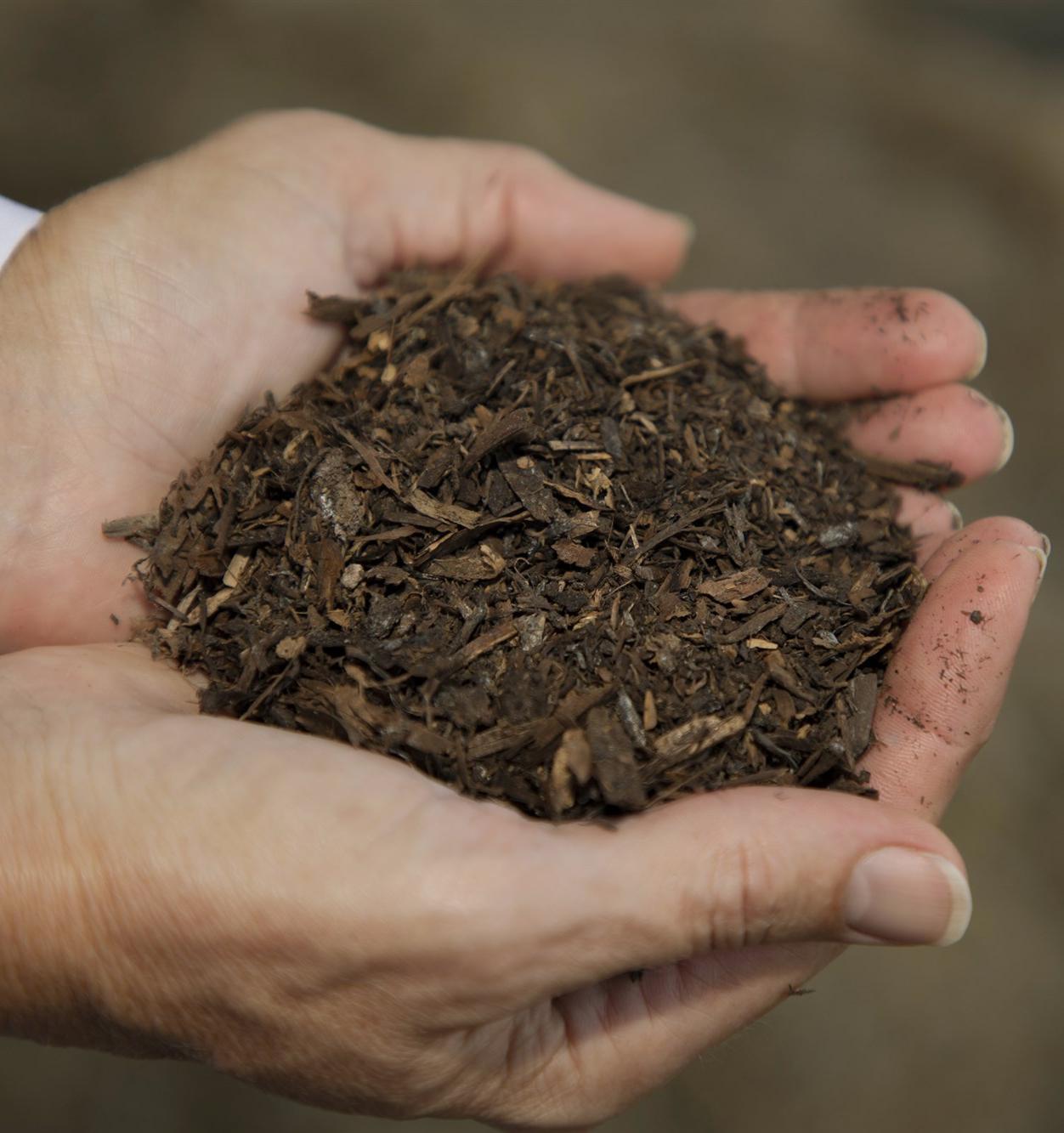 Как традиционное погребение хотят заменить экологичным компостированием
