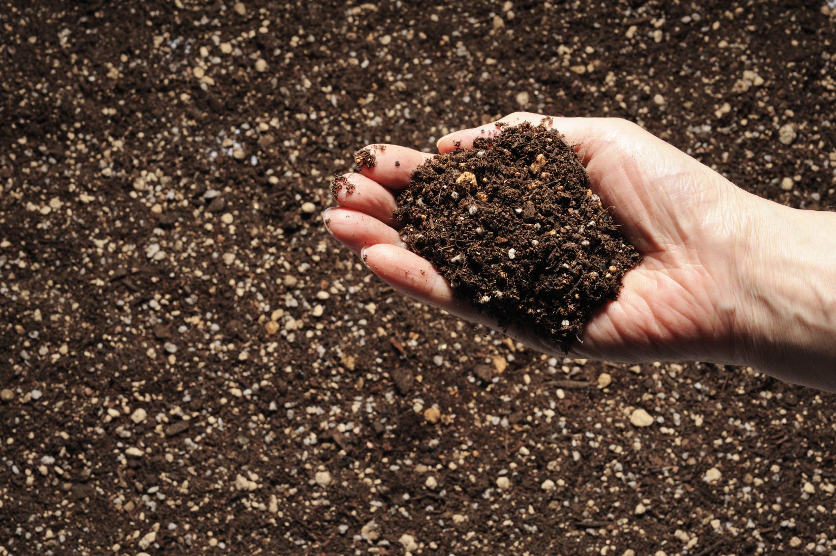Из органических отходов будут делать удобрения с помощью бактерии