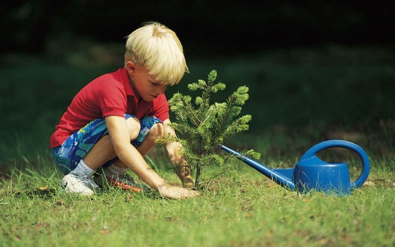 В рамках акции Рослесхоза можно посадить деревья до конца октября