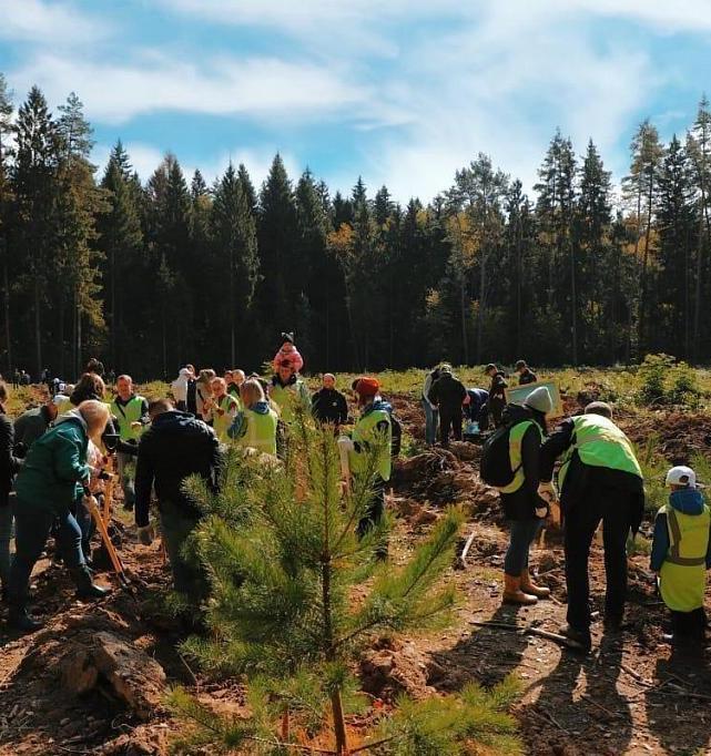 Lesnoe Delo: миллион деревьев на восстановление погибших лесов