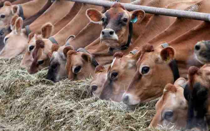 В Крыму построят безотходные фермы