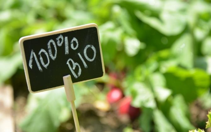 Лекцию о еде и экологии прочитают в Парке Горького
