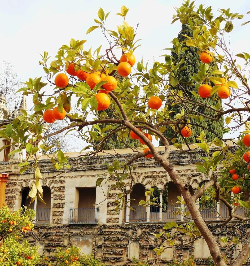 В Испании будут производить электроэнергию из апельсинов