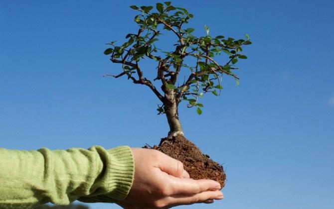 Приглашаются волонтеры для посадки деревьев в экопарке «Демидовский»