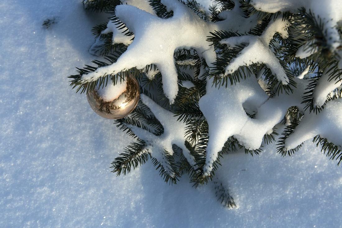 Акцию по сбору новогодних елок продлили до 19 января