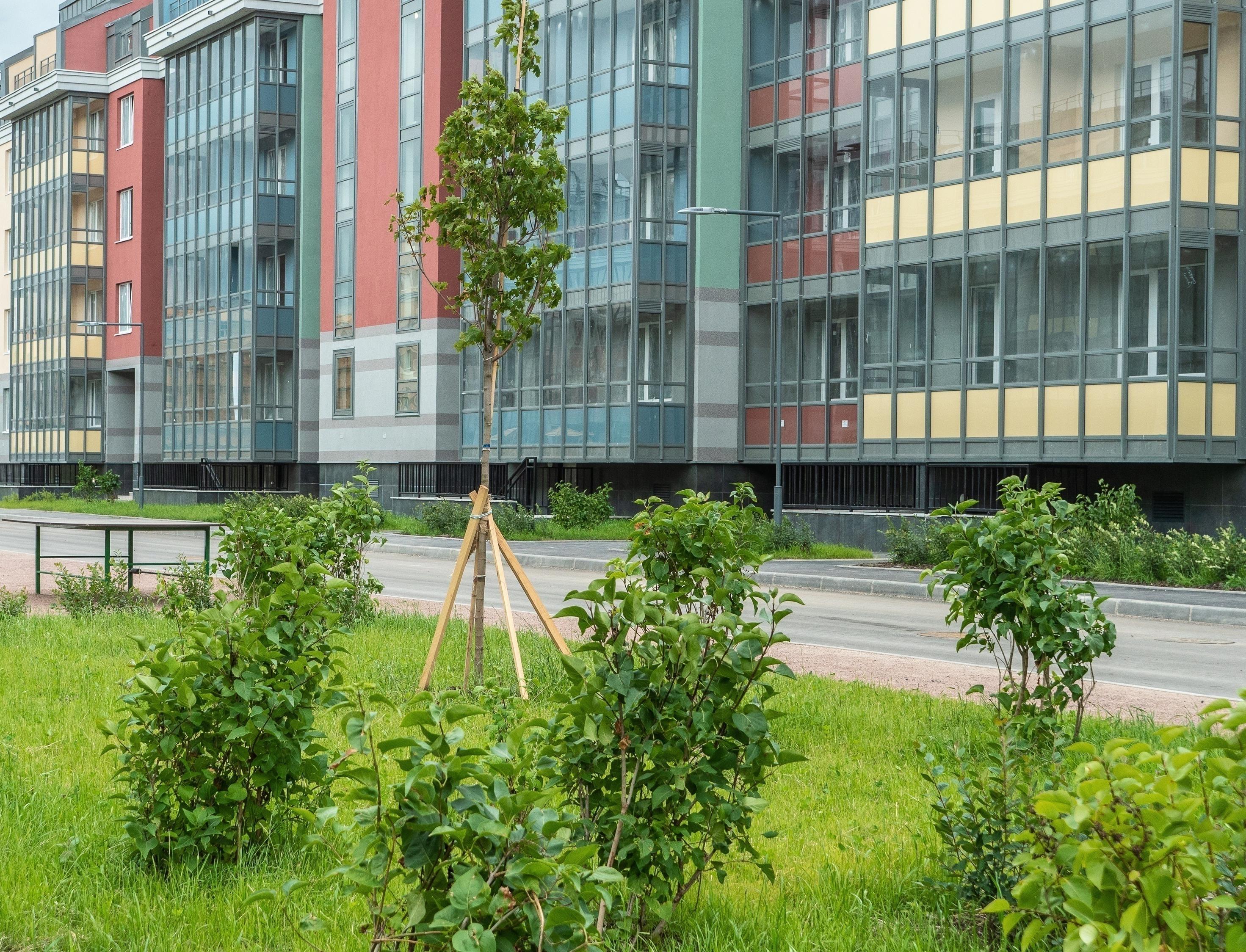 «Пятёрочка» и «Чистая линия» займутся озеленением районов российских городов