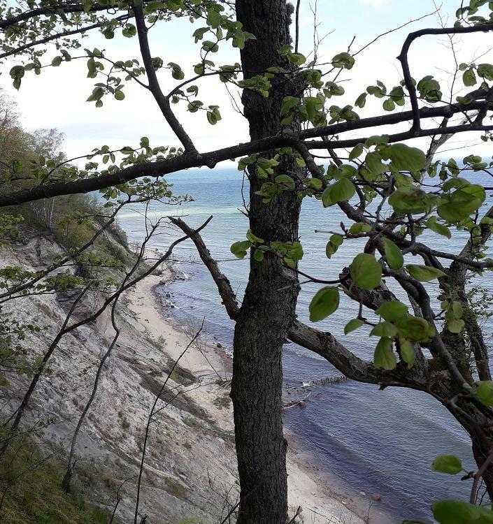 Варникенский лес получит статус городского