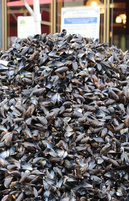 Ракушки Фестиваля мидий переработают в керамическую плитку