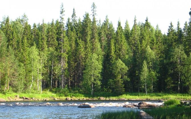 ОНФ выступил против вырубки леса в Карелии