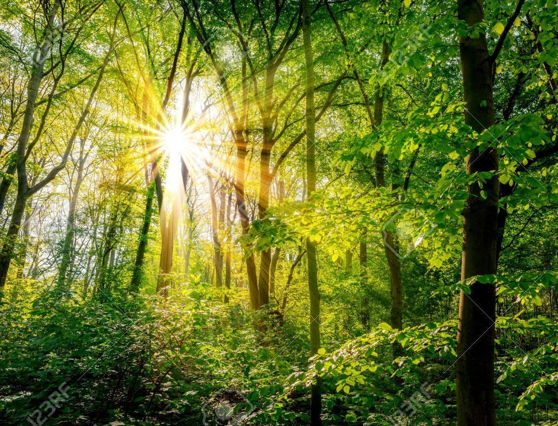 Экологи предлагают подарить к 23 февраля настоящие деревья вместо носков