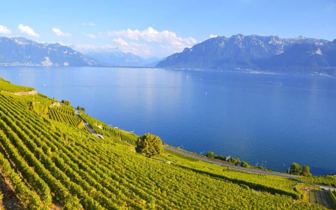 Швейцарское вино стало лучше благодаря изменениям климата
