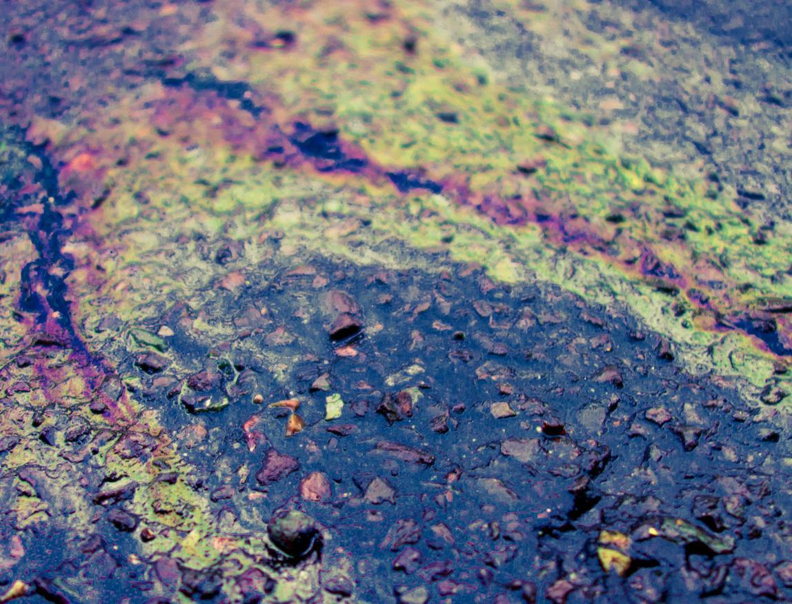 Кто и как борется с экологическими преступлениями в России