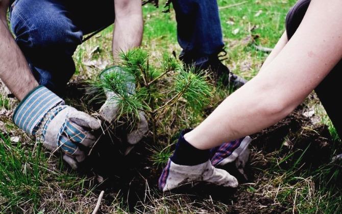 В Парке Горького каждый сможет посадить дерево