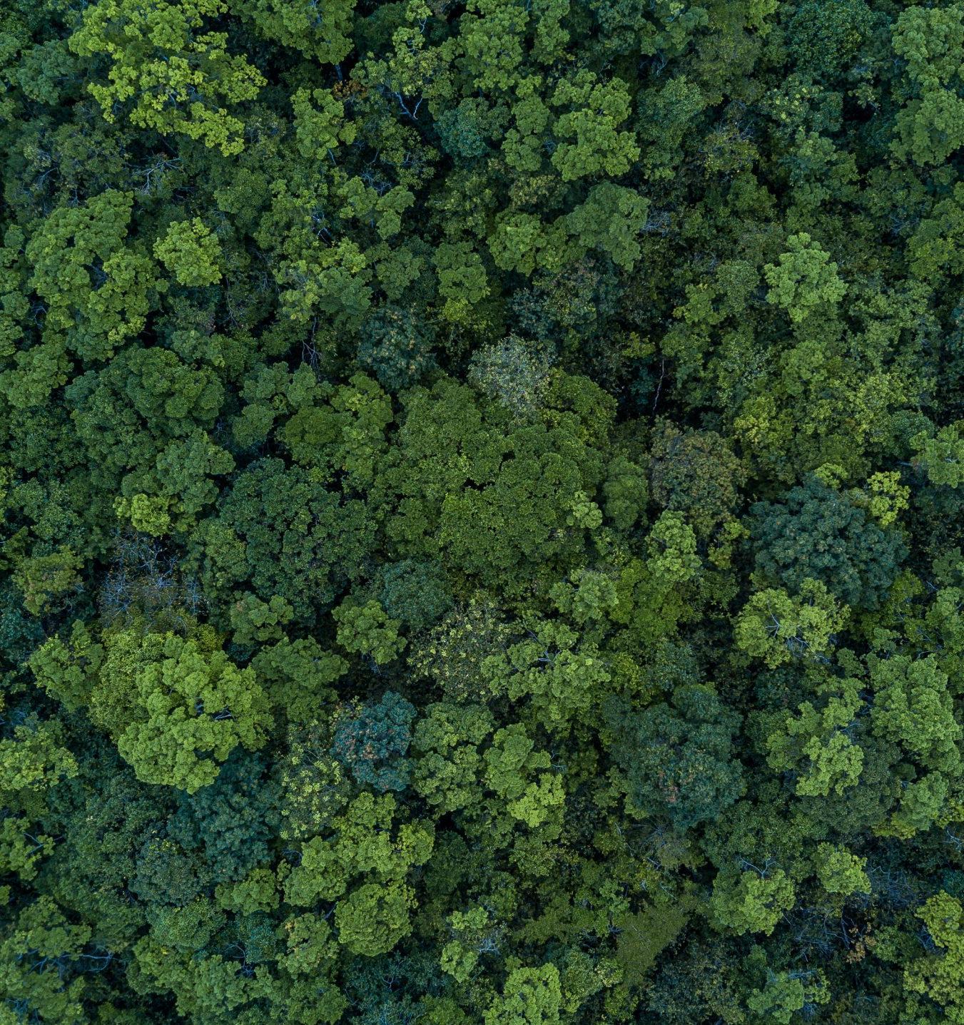 FSC-Пятница 2020 в России: итоги международного Дня ответственного отношения к лесу