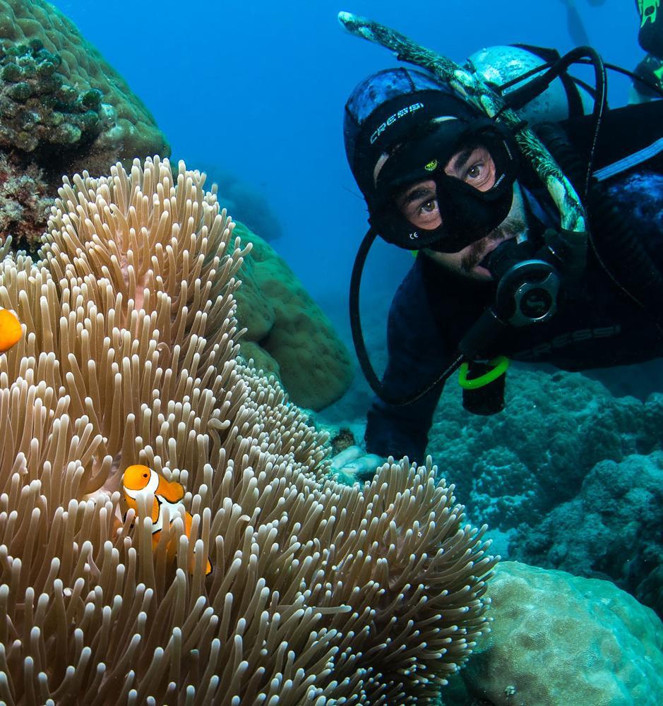 Туроператор выращивает коралловые рифы во время пандемии
