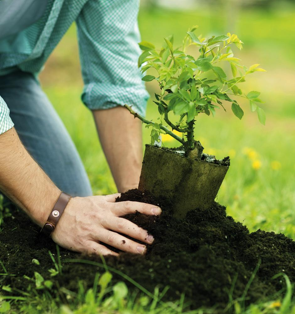 Движение ЭКА выпустило инструкцию по организации посадок деревьев