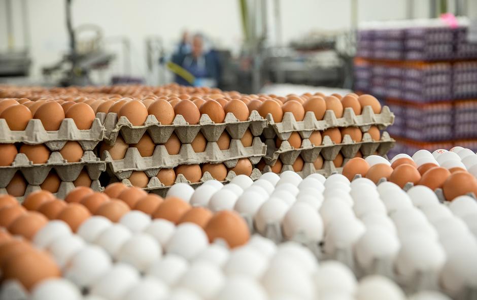 Пластик или бумага: какая упаковка для яиц лучше