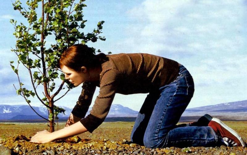 МГУ и «Маракуйя» восстановят лес на Звенигородской биостанции